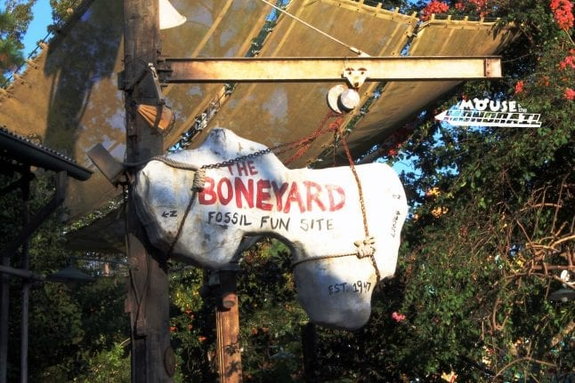 Toddlers love the Boneyard at Disney's Animal Kingdom