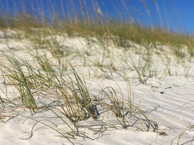The beaches are spacious and uncrowded- one of many reasons to visit Alabama beaches.