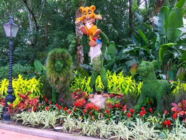 Lion King Topiary at Epcot Flower and Garden Festival