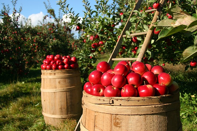 Apple picking is a great fall travel idea for families.
