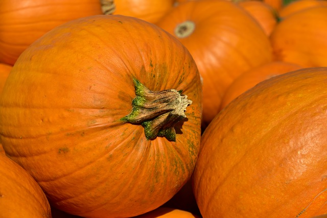 Fall travel for families usually includes a visit to the pumpkin patch.