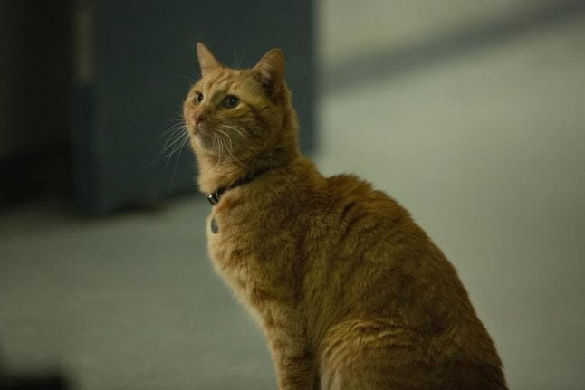 Goose the Cat from Captain Marvel.
