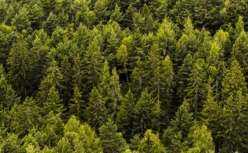 Forests are replanted with donations to the Arbor Day Foundation.