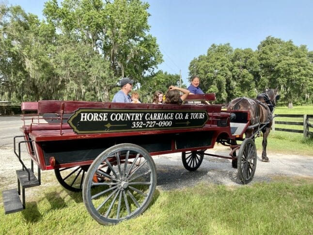 Horse Country Carriage Tours gives tours of horse farms in Ocala Florida