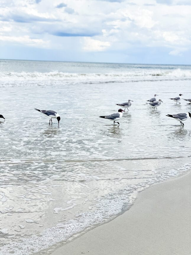 Seagulls enjoying the beach in Florida