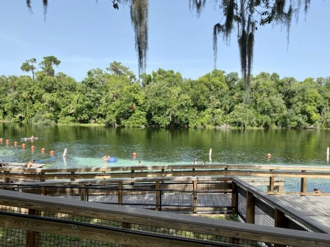 Swimming at KP Hole State Park is a fun thing to do in Ocala, Florida.