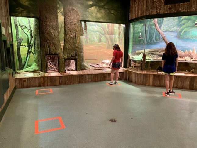 Social Distancing in Jacksonville Zoo