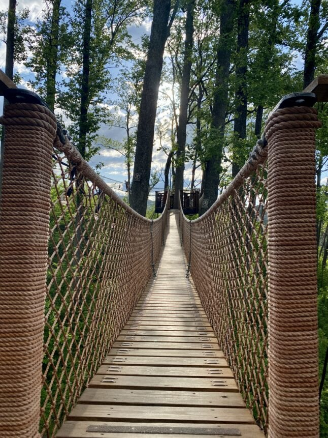 Tree top walkways are one of the best features of Anakeesta.
