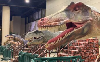Dinosaurs visitors can ride at Jurassic Quest